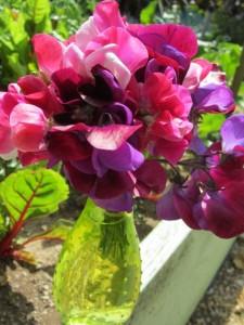elena's garden...spring sweetpeas