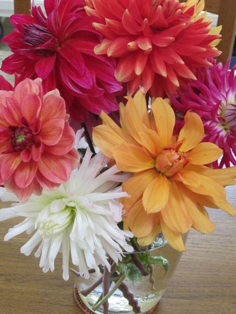 can't wait for summer 2013 dahlias!