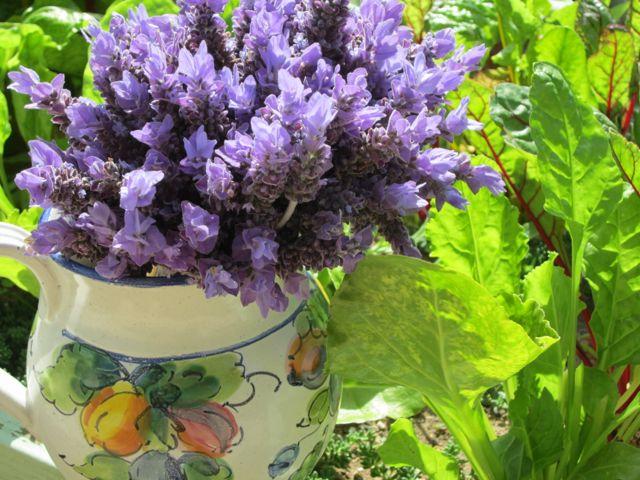 luscious lavender!