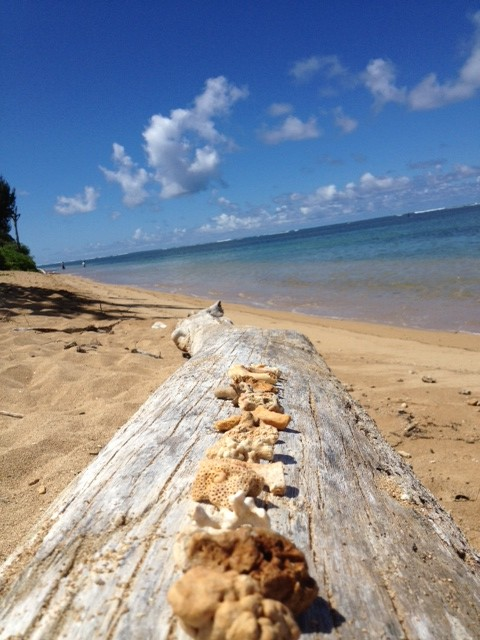 anini beach…coral collection