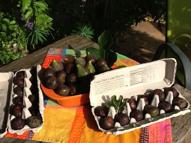 MISSION figs from the front yard…local and seasonal!